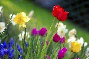 Colorful_spring_garden[1]