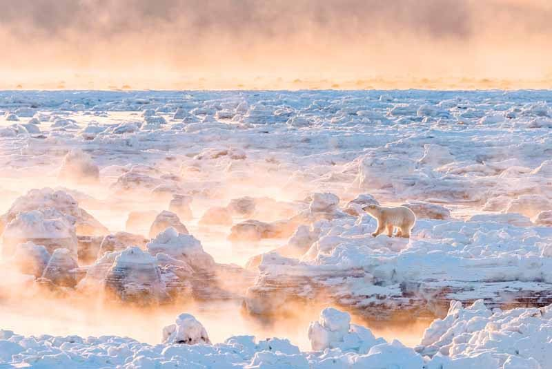 Gulbransen's winning photo of a polar bear on Hudson Bay.