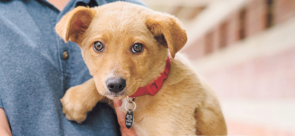 Dogs Rescued For Up North